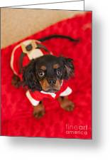 Christmas Puppy Greeting Card by Kay Pickens