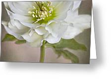 Christmas Rose Greeting Card by Jacky Parker
