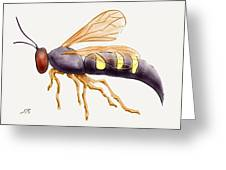 Cicada Killer Wasp Greeting Card by Stacy C Bottoms