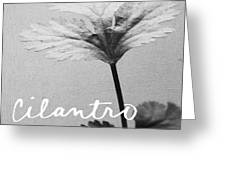 Cilantro Greeting Card by Linda Woods