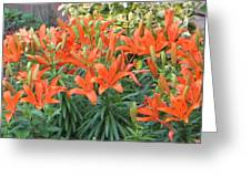 Cincture Of Lilies Greeting Card by Sonali Gangane