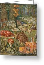 Citizens Of The Land Of Mushrooms Greeting Card by Science Source