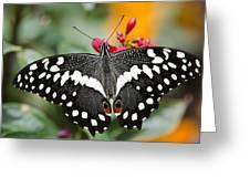 Citrus Swallowtail Butterfly Greeting Card by Saija  Lehtonen