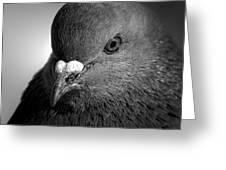 City Bird Gang Leader Greeting Card by Bob Orsillo