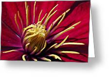 Clematis Center In Oils Greeting Card by Chris Berry