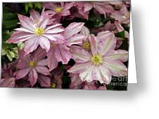 Clematis First Lady Greeting Card by Ros Drinkwater