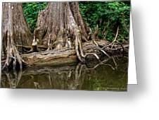 Clinging Cypress Greeting Card by Christopher Holmes