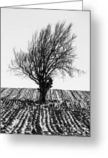 Close Tree In Snow Greeting Card by John Farnan