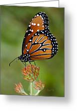 Close-up Pose Greeting Card by Penny Lisowski