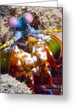 Close-up View Of A Mantis Shrimp Greeting Card by Steve Jones