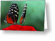 Closer To Me Greeting Card by Vronja Photon