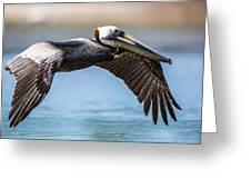 Closeup Of A Flying Brown Pelican Greeting Card by Andres Leon