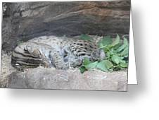 Clouded Leopard - National Zoo - 01131 Greeting Card by DC Photographer