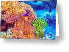 Clown Fish In Coral Garden Greeting Card by Anna Omelchenko
