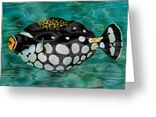 Clown Triggerfish Greeting Card by Jack Zulli