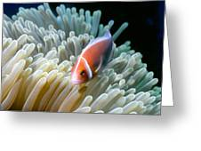 Clownfish 9 Greeting Card by Dawn Eshelman