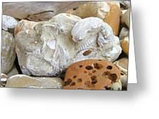 Coastal Shell Fossil Art Prints Rocks Beach Greeting Card by Baslee Troutman
