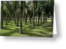 Coconuts trees in a row Greeting Card by Sami Sarkis