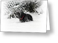 Cold Feet Greeting Card by Sharon Lisa Clarke