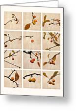 Collage Paradise Apple Greeting Card by Alexander Senin