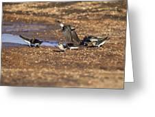 Collecting Mud Greeting Card by Douglas Barnard