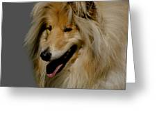 Collie dog Greeting Card by Linsey Williams
