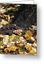 Color Of Change Greeting Card by John Rizzuto