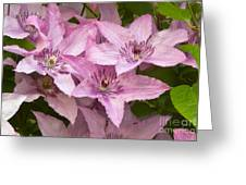 Color Of Pink Greeting Card by Timothy J Berndt