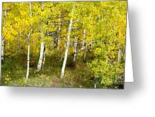 Colorado Autumn Greeting Card by Baywest Imaging
