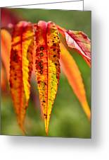 Colorful Autumn Leaves Greeting Card by Gynt
