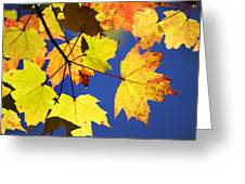 Colorful Autumn Maple Leaves Abstract Art Greeting Card by Christina Rollo