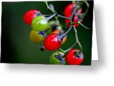 Colorful Berries Greeting Card by Rosanne Jordan