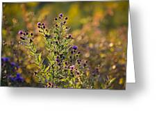 Colorful Bouquet Of Purple Aster Flowers Greeting Card by Christina Rollo