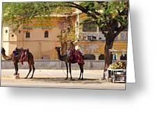 Colorful Camels - Jaipur India Greeting Card by Kim Bemis