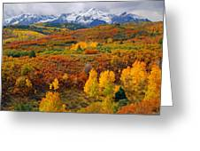 Colorful Colorado At It's Best   Greeting Card by John Hoffman