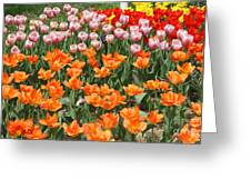Colorful Flower Bed Greeting Card by John Telfer