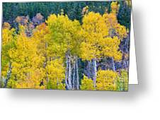 Colorful Forest Greeting Card by James BO  Insogna