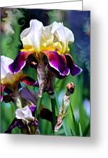 Colorful Iris Grandeur Greeting Card by Karon Melillo DeVega
