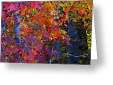 Colorful Maple Leaves Greeting Card by Scott Cameron
