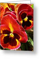Colorful Pansies Greeting Card by Bruce Bley