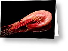 Colorful Shrimp Greeting Card by Toppart Sweden