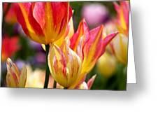 Colorful Tulips Greeting Card by Rona Black