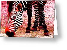 Colorful Zebra - Buy Black And White Stripes Art Greeting Card by Sharon Cummings