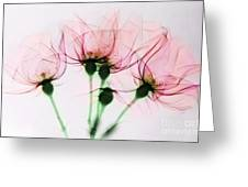 Colorized X-ray Of Roses Greeting Card by Scott Camazine