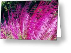 Colors Greeting Card by James McAdams