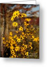 Colors Of Autumn Greeting Card by Sabrina L Ryan