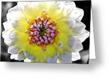 Colorwheel Greeting Card by Karen Wiles