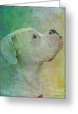 Colours Greeting Card by Judy Wood