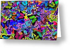 Colours Of Butterflies Greeting Card by Alixandra Mullins