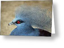 Common Crowned Pigeon Greeting Card by Cynthia Guinn
